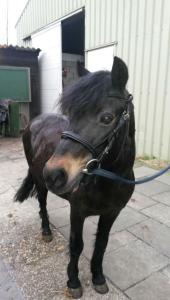 Nieuwe pony